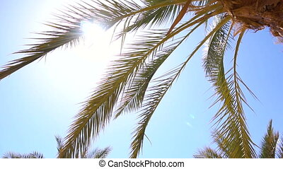Palm trees in tropical country in day time in slow motion