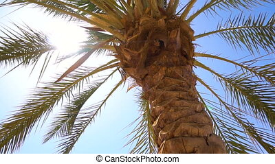 Palm trees in tropical country in day time in slowmo