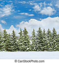 Beautiful winter landscape: a field covered with snow and...