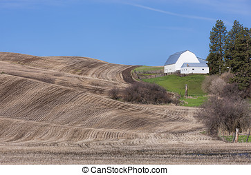 Barn and field on the Palouse.