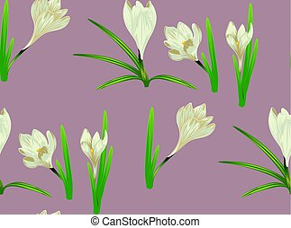 White Crocus Flowers - Spring flowers, white blooming crocus...