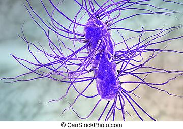 Coli,  escherichia, bacteria