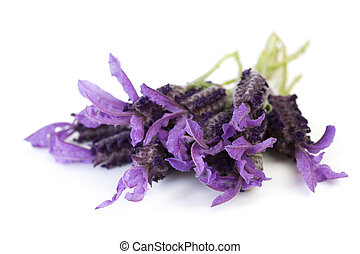 Lavender flowers isolated on white. This is Spanish lavender...