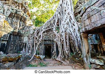 Ta Prohm temple - Ta Prohm jungle temple in Angkor...