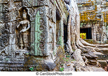 Ta Prohm temple - Ta Prohm jungle temple in Angkor...