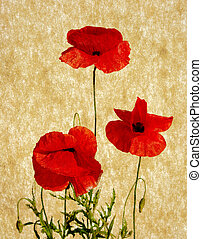poppies pasted on a grunge background