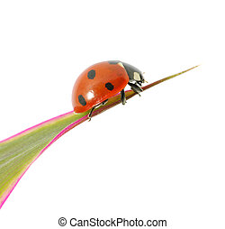 ladybug sitting on a green leaf