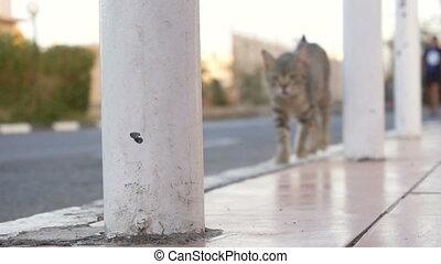 Cat walking outdoor in slow motion - Homeless cat walking...