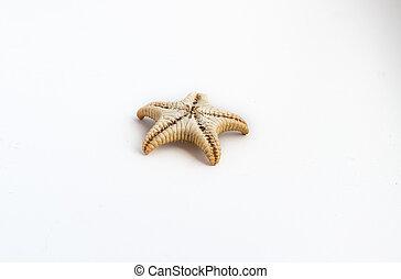 Beautiful starfish on a white background - Beautiful...