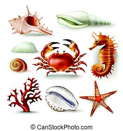 Set of vector illustrations seashells, coral, crab and...