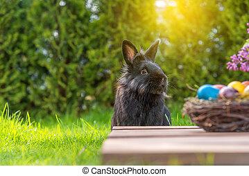 Frohe Ostern - Ostereier und Osterhase im Gras
