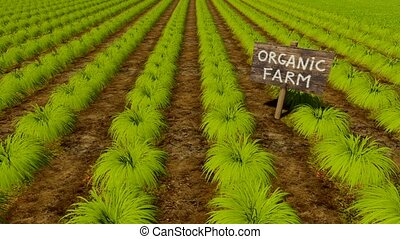 Wooden sign Organic Farm among green beds - Hand drawn...