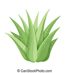 Isolated succulents on white background. - Succulent plant....