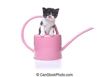 Cute 3 week old Baby Kitten in a Garden Watering Can -...