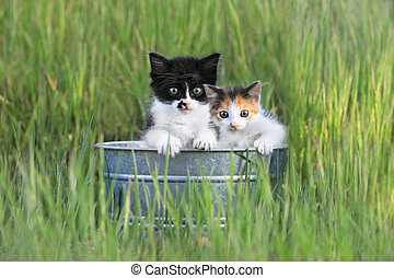 Kittens Outdoors in Tall Green Grass - Adorable Kittens...