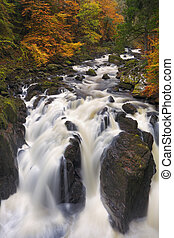 River through autumn colours at the Hermitage, Scotland -...