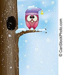 cute owl on a branch in winter