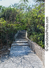 Stone and Cement Path and Steps Into Jungle - Smooth Stone...