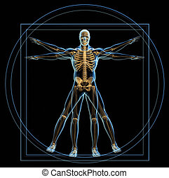 Vitruvian man - Body and skeleton in Vitruvian man - 3d...