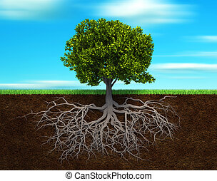 The tree and rood - Section in soil showing the root of a...