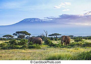 Elephants and Kilimanjaro  in the setting sun