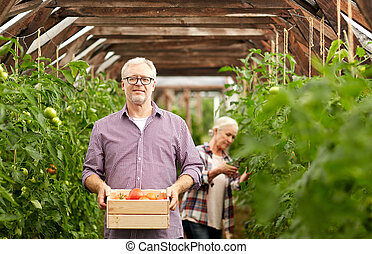old couple with box of tomatoes at farm greenhouse -...