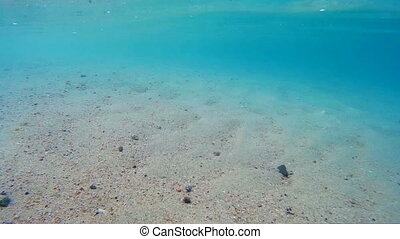 Chasing small fish in the sea underwater go pro POV view