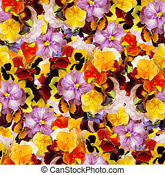 Beautiful seamless background with multi-colored pansies. -...