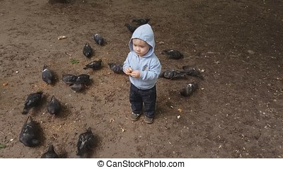 Little baby feeding pigeons in the street