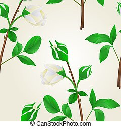 Seamless texture buds white Rose stem with leaves vintage vector.eps