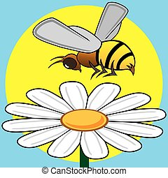 Bee Pollinating - Busy bee is hovering over a daisy in the...