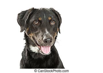 Happy Crossbreed Dog Headshot