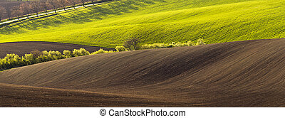 Spring landscape with field - Spring wavy landscape with...