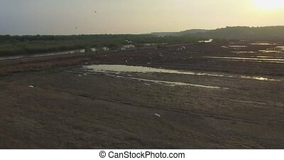 Flight over soaring herons at sunset - landscape of Goa in...