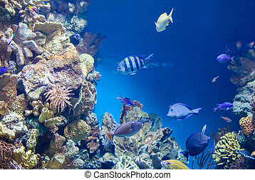 many Fish on the coral reef - many beautiful fish on the...
