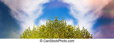 Lush foliage blue sky and white cloud - Low angle view of...