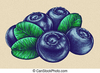 Engrave isolated blueberry hand drawn graphic illustration -...
