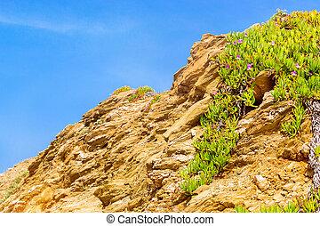 Tropical green Alpine plant. Bali, Crete - Tropical green...