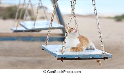 Curious playful cat rides on retro wooden swing. - Curious...