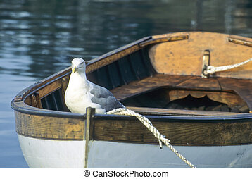 Seagull perched on a rowboat