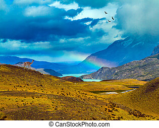 Magnificent rainbow crosses storm clouds - Guanaco near the...