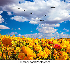 Flock of migratory birds fly under the clouds - Flock of...