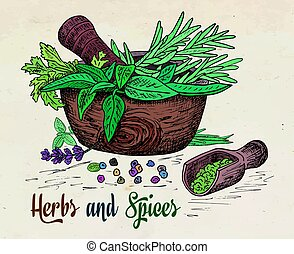 beautiful hand drawing healthy herbs and spices mortar