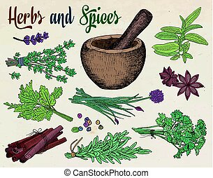 beautiful hand drawing healthy herbs and spices mortar.