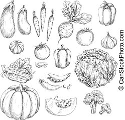 Vegetables sketch vector isolated icons - Vegetables vector...