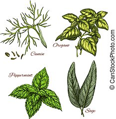 Vector sketch icons of spice and herb dressings
