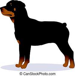 Rottweiler dog vector illustration