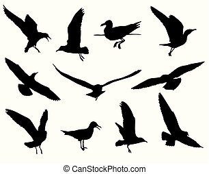 seagull silhouette collection