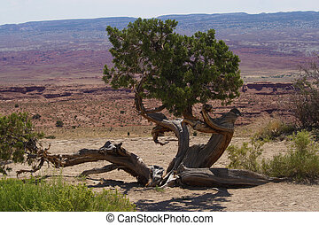 Desert Tree - A tree growing on a desert landscape.