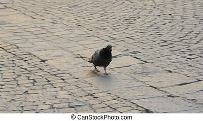 Lonely pigeon on the sidewalk